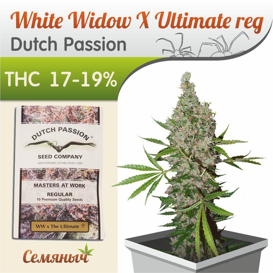 Купит семяныч семена канабиса вейдер и марихуана дарт