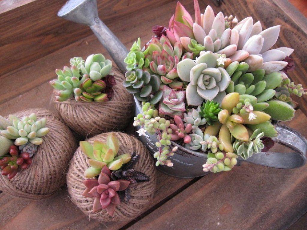 C mo decorar con nuestra colecci n de suculentas for Plantas crasas interior