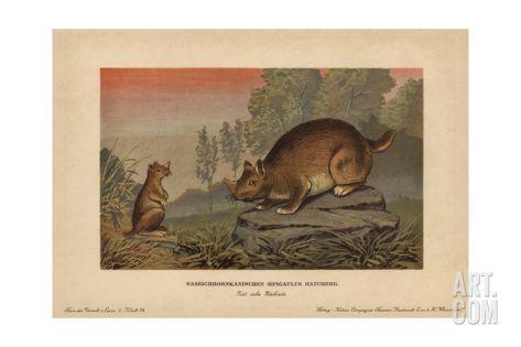 Horned Gopher, Ceratogaulus Hatcheri, Extinct Rodent From the Pleistocene Giclee Print by F. John at Art.com