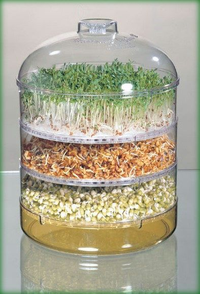 SEED SPROUTER - this is such fun and the sprouts add great flavour to salads an sandwiches.