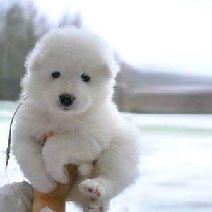 Fantastic Mixed Chubby Adorable Dog - af6e440a38702f50b3afbf9b824570f0  Picture_6952  .jpg