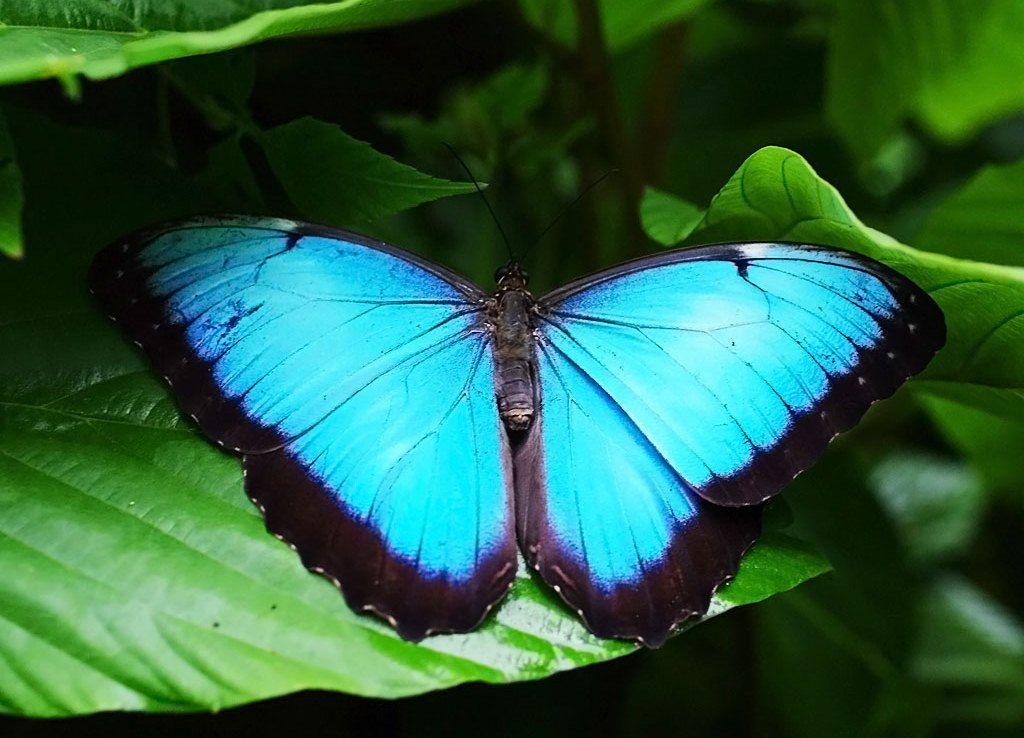 rainforest butterfly wallpaper - photo #17