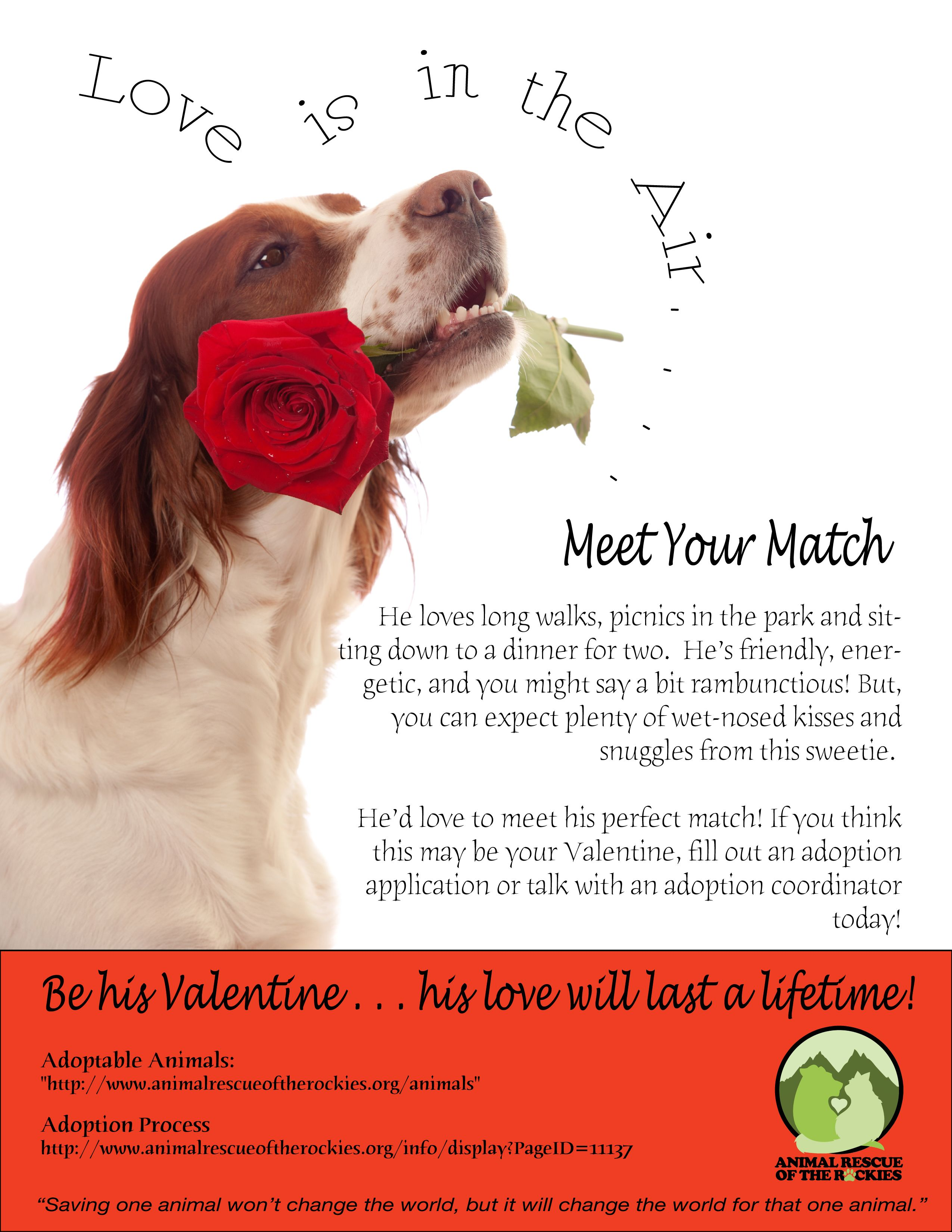 Be My Valentine Adopt An Orphaned Pet And You Ll Get A Lifetime Of Love Animal Rescue League Animal Valentine Animal Advocacy