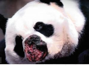 Would You Do This To A Panda Ad Campaign To Stop Rhino