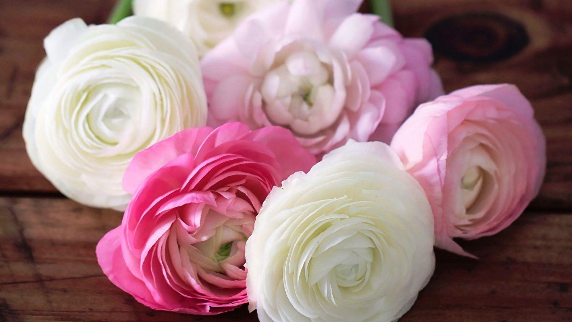 Ranunculus Flower Wallpaper Rose Flower Wallpaper Flower