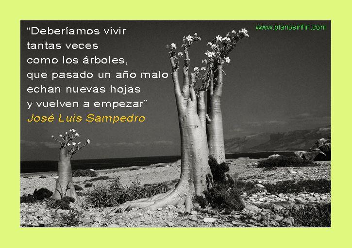 Jose Luis Sampedro, frases de sabiduría - Plano Sin Fin