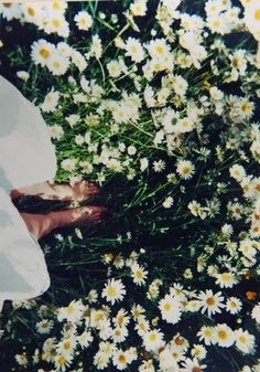 Daisy daydreams// elisabethfleur.blogspot.com