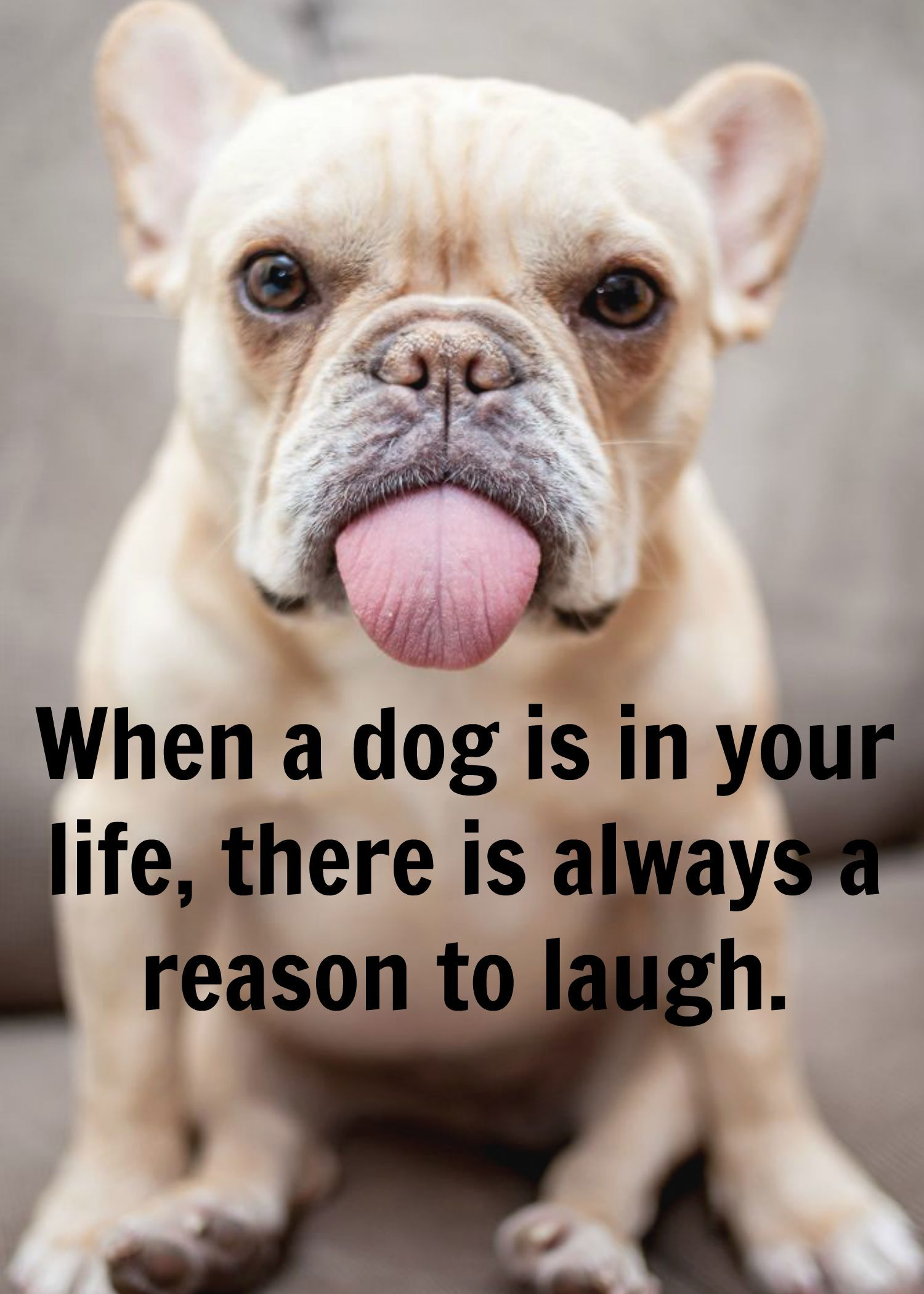 Bulldog Quotes Funny Bulldog  Www.fordogtrainers Quote Dog  Bulldog's
