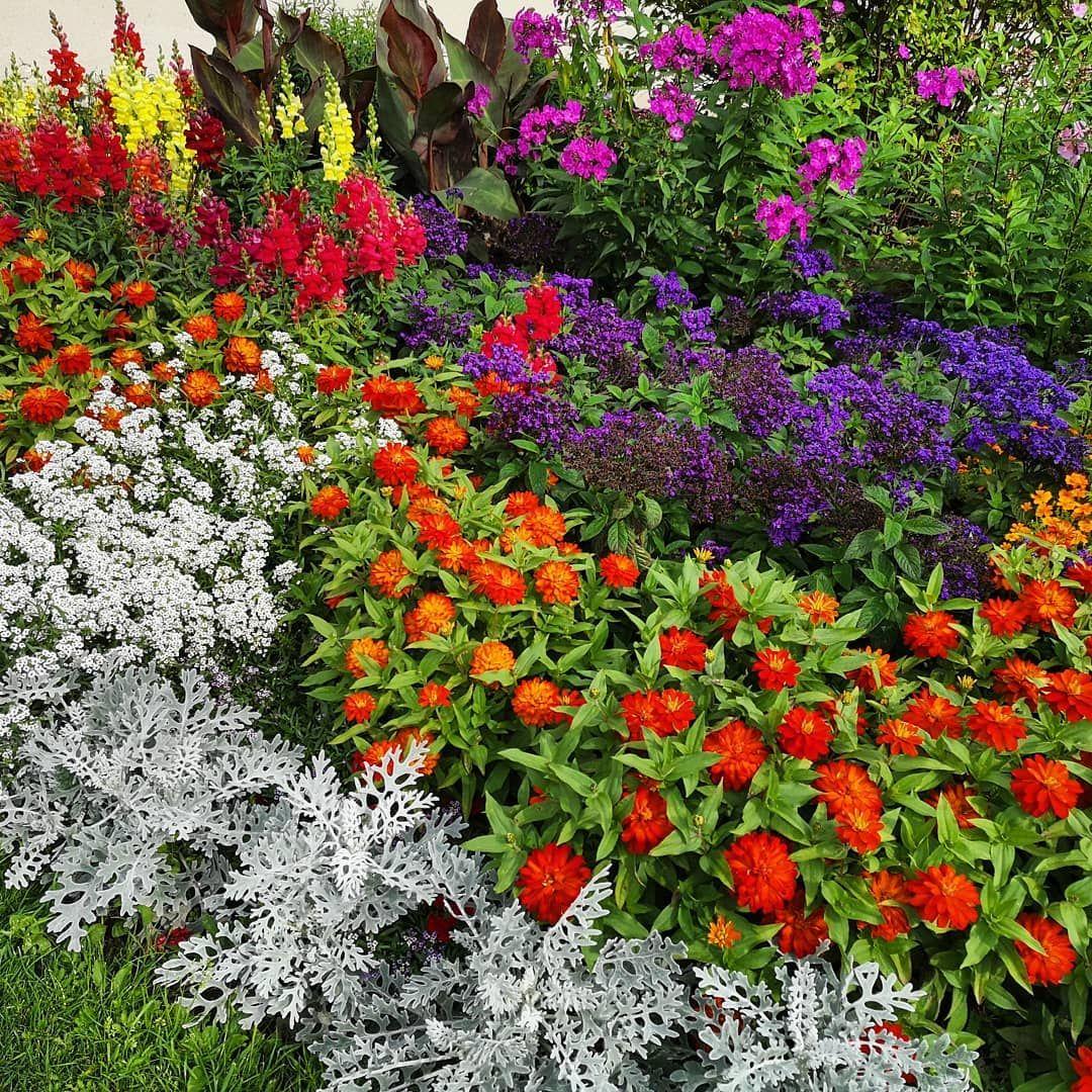 Napotkany Klomb Kwiaty Flowers Rosliny Plants Foto Photo Fotografia Photography Huawei Garden Ogrody Blog Plants Flowers