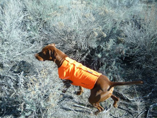 Rivers West Upland Dog Vest Dog Training Dogs Dog Supplies