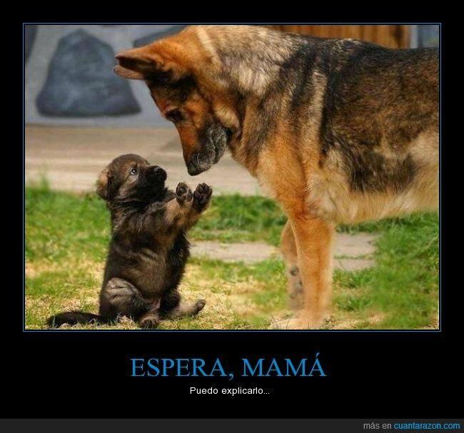 Espera Mama Cute Animals Animals Shepherd Puppies