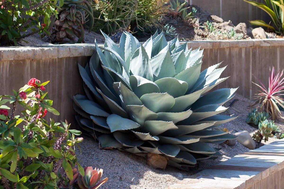 Quand On Decouvre Un Nouveau Type De Plantes Tres Souvent On