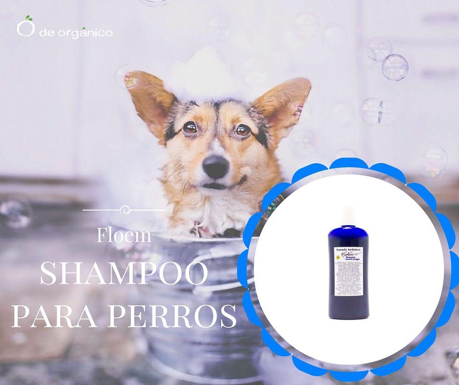 Este shampoo ataca a hectoparásitos desde sus diferentes sistemas ...