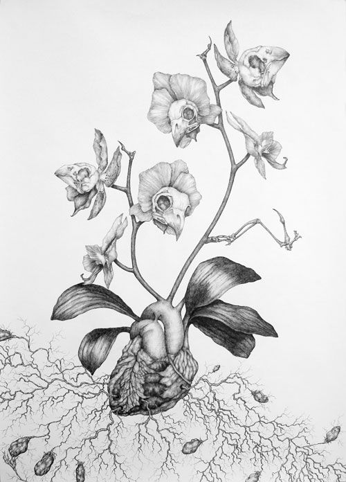 'Orchis Nodulosa' 2008 - Pen on paper Works by Kate Street (UK): www.katestreet.co.uk Works available at Nettie Horn gallery (London): www.nettiehorn.com