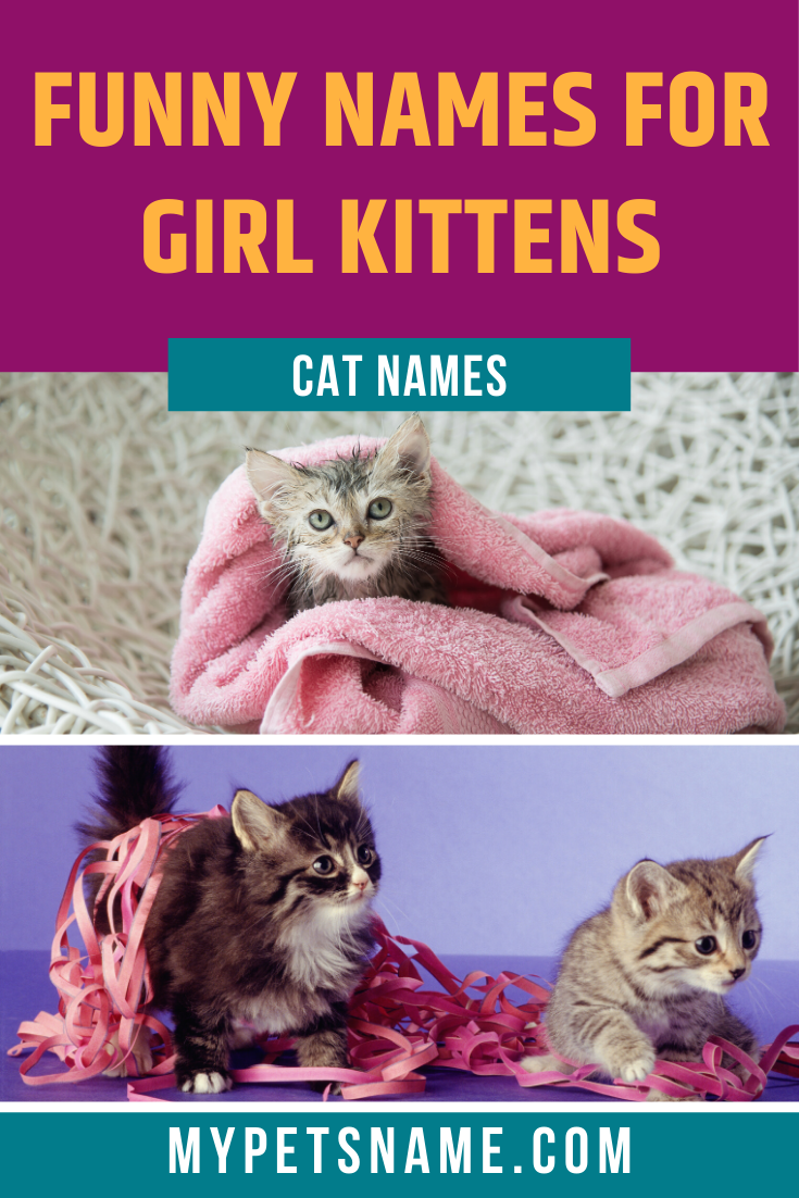 We Love Drawing Inspiration From Female Actresses Singers And Historical Figures For Our List Of Girl Funny Cat Names M In 2020 Funny Cat Names Cat Names Funny Cats