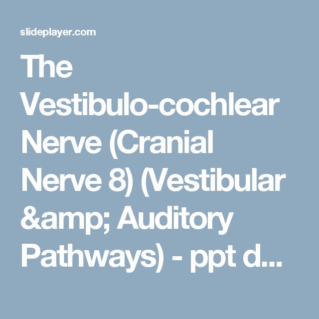 The Vestibulo Cochlear Nerve Cranial Nerve 8 Vestibular