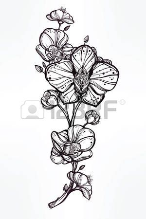 Vintage floral tr s d taill dessin la main fleur d 39 orchid e souches avec des bourgeons et p - Dessin d orchidee ...