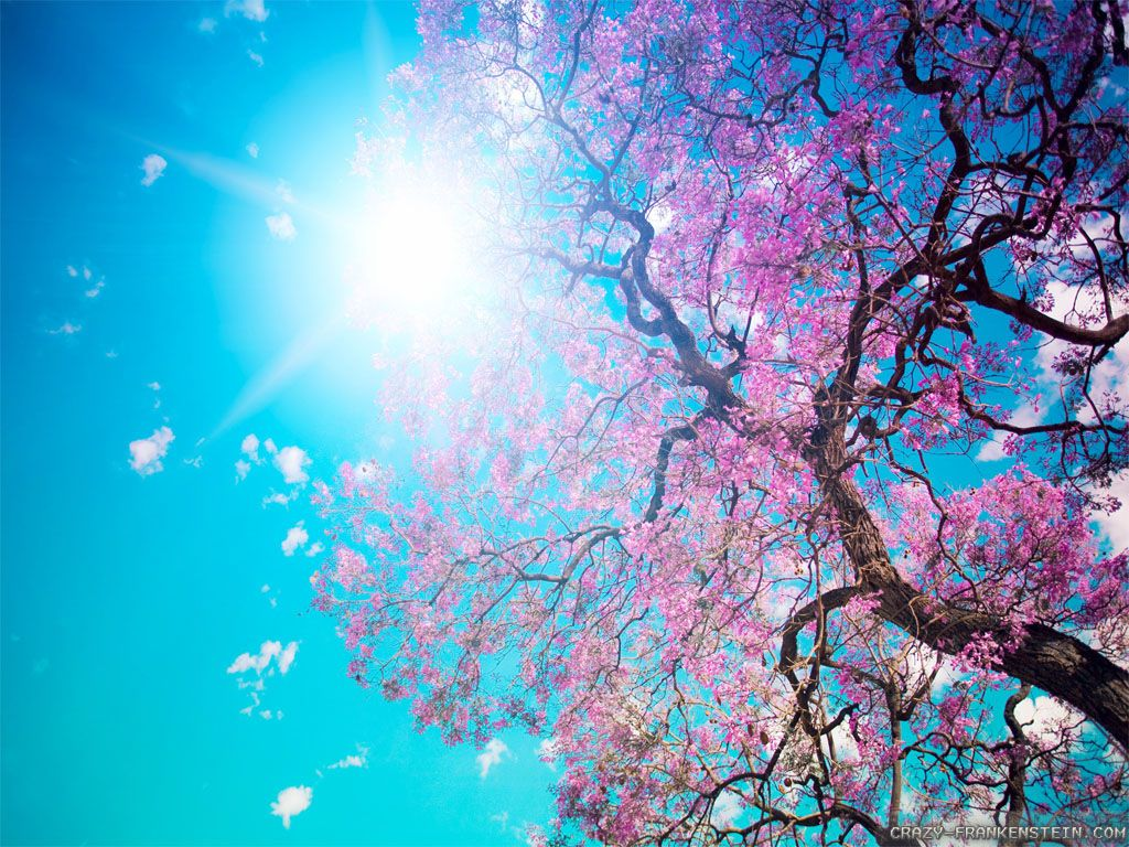 Beautiful Nature Spring Nature Wallpapers 4106 Ilikewalls Com Beautiful Nature Spring Spring Wallpaper Spring Desktop Wallpaper