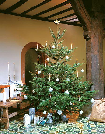European Fir Tree Fir Christmas Tree Christmas Tree Holiday Christmas Tree