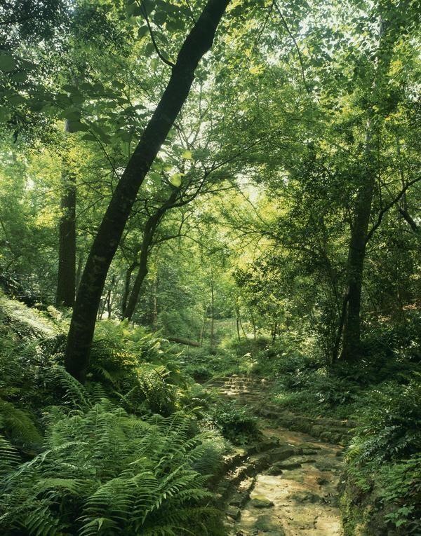 Hike in the Bayou Bend Gardens.   Bayou bend, Houston ...