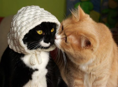 Whaaaat? Statistics from the Pennsylvania Dutch Accounting Initiative show that kitten marriages among the Amish are on the rise.  Last year at this time only three Amish Mennonite kitten couples had tied the knot.  This year there have already been 7 cat weddings in Pennsylvania and 3 more in Amish communities in Ohio.