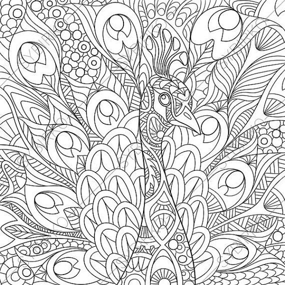 Coloring Pages For Adults Peacock Colouring Page Adult Coloring