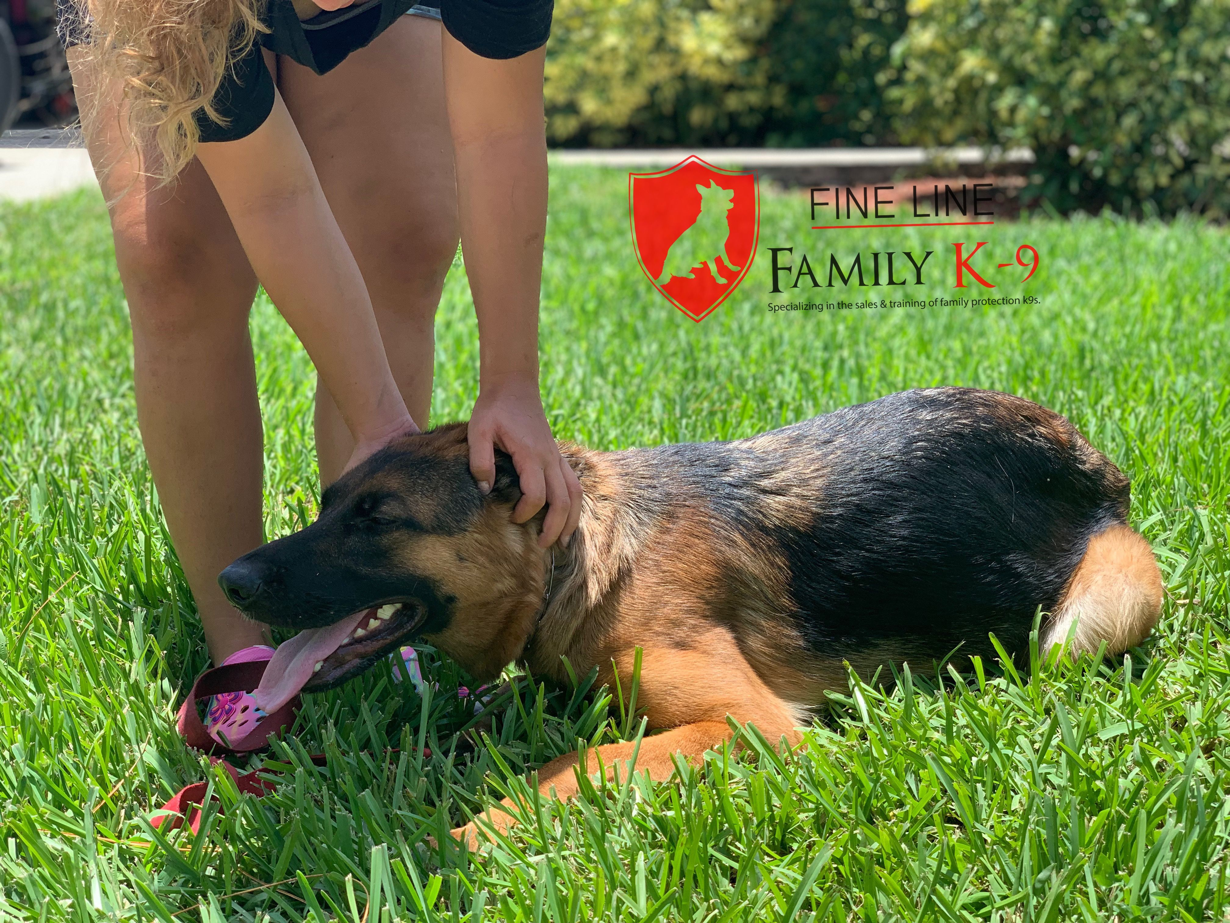 Kira Getting Tons Of Pets For Going In Her Down Boardandtrain Dogtrainer Dogtraining Obedience Workingdog Dog Dogs Working Dogs Dog Training Dog Lovers