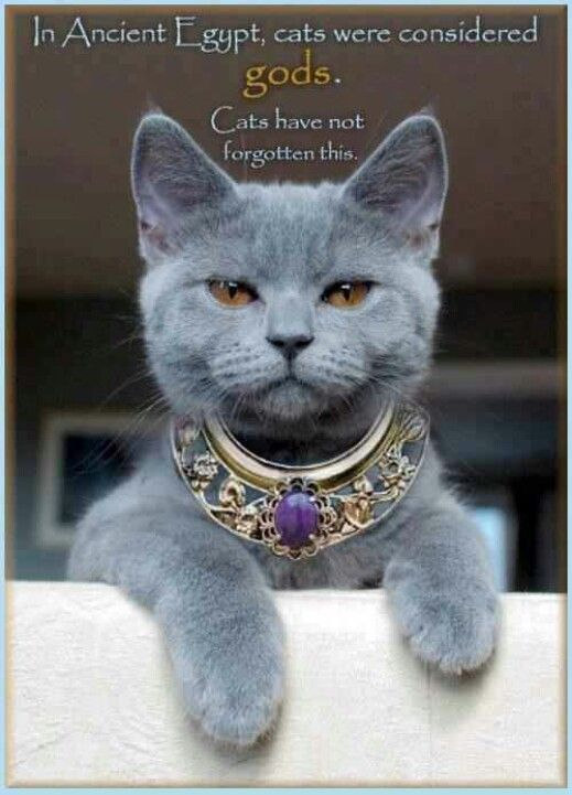 Pet me meow.