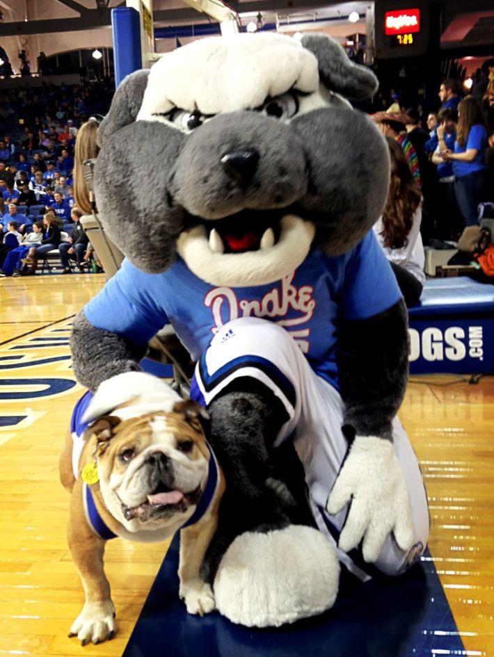 Drake University Basketball Google Search Drake Bulldogs