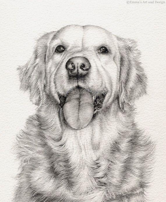 Golden retriever pet portrait original pencil by petartportraits chien en 2019 drawings - Dessin golden retriever ...