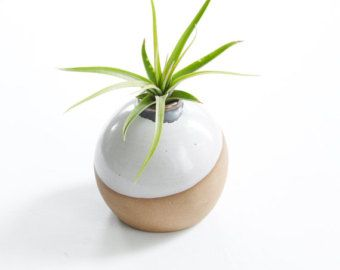 Perfect Planter/Vase For Air Plant In White With Hazelnut Clay Body