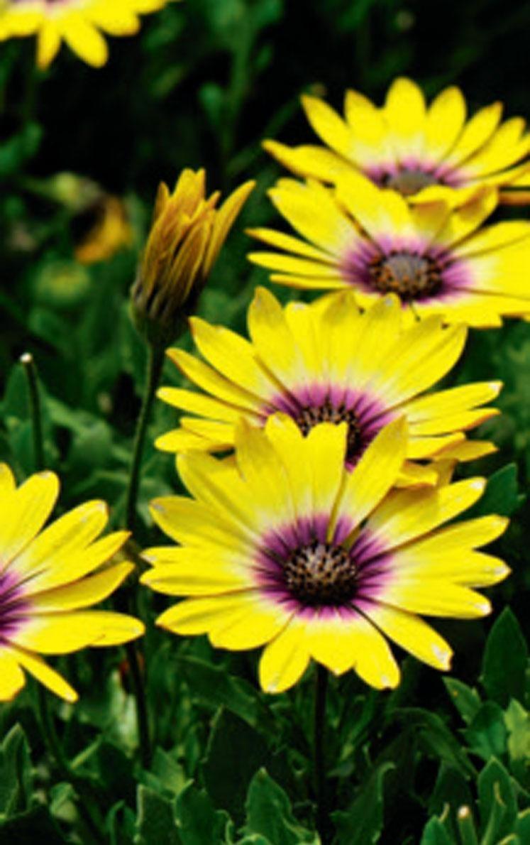 Notre sélection des plus belles nouveautés horticoles pour égayer les cours ombragées.