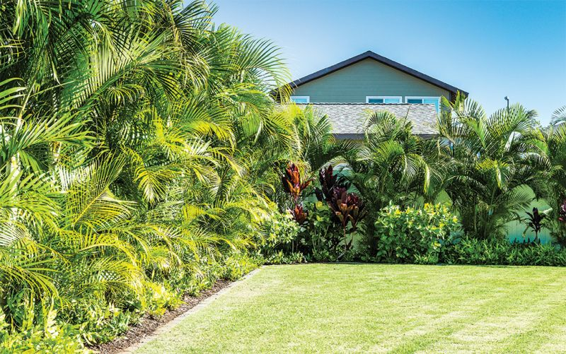 These Palm Trees Will Keep You Cool And Boost Your Curb Appeal