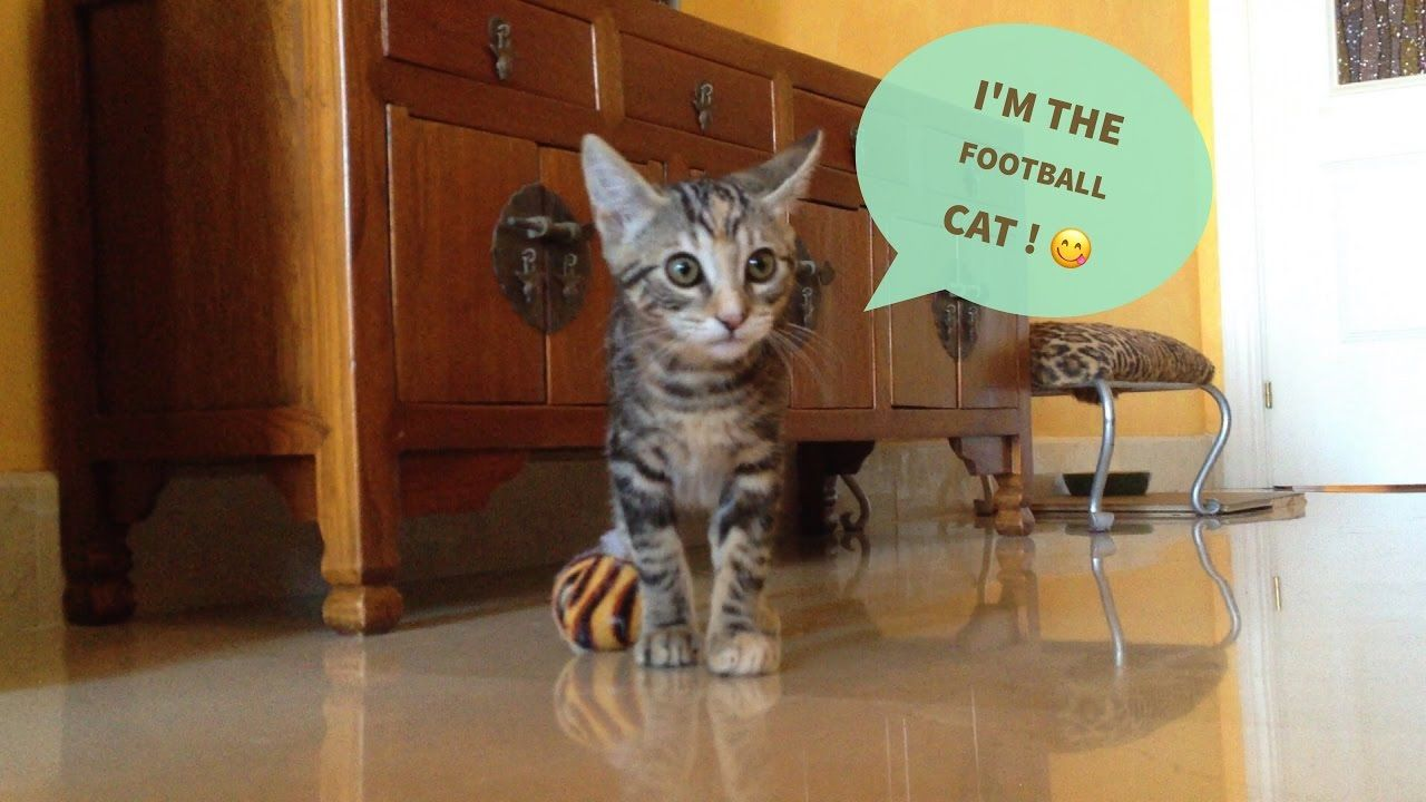 Cats Vlog 19 Benny Chili The Footballer Kitten Cute Cat Gif Cats Cat Gif