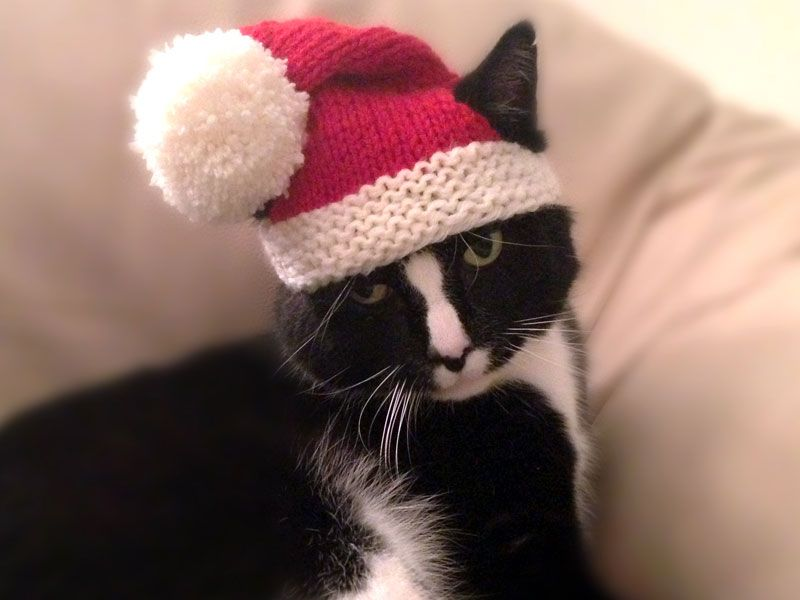 Knit A Christmas Sweater Hat Collar Or Scarf For Your Dog Or Cat
