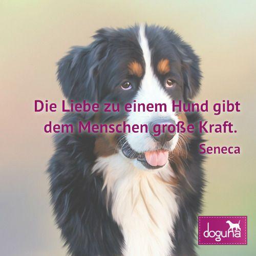 Die Liebe Zu Einem Hund Gibt Dem Menschen Grosse Kraft Seneca