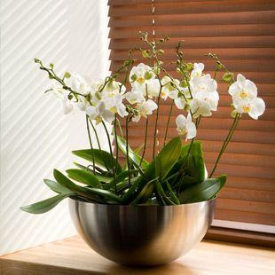 Zimmerpflanzen wohin kr ger jagdzimmer pinterest for Topfblumen wohnzimmer