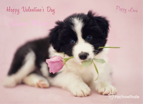 Valentines Day Puppies Wallpaper