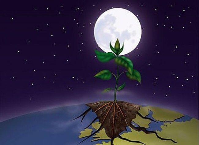 Comment jardiner avec la lune en décembre 2019   Calendrier lunaire, Décembre, Ornement