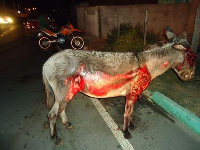 Heartless bastard drags donkey behind car, just for fun. He later dies from his injuries. (petition)➨ www.avaaz.org/po/petition/justica_o_caso_de_crueldade_com_jeque_na_cidade_de_graccho_cardoso_em_Sergipe/