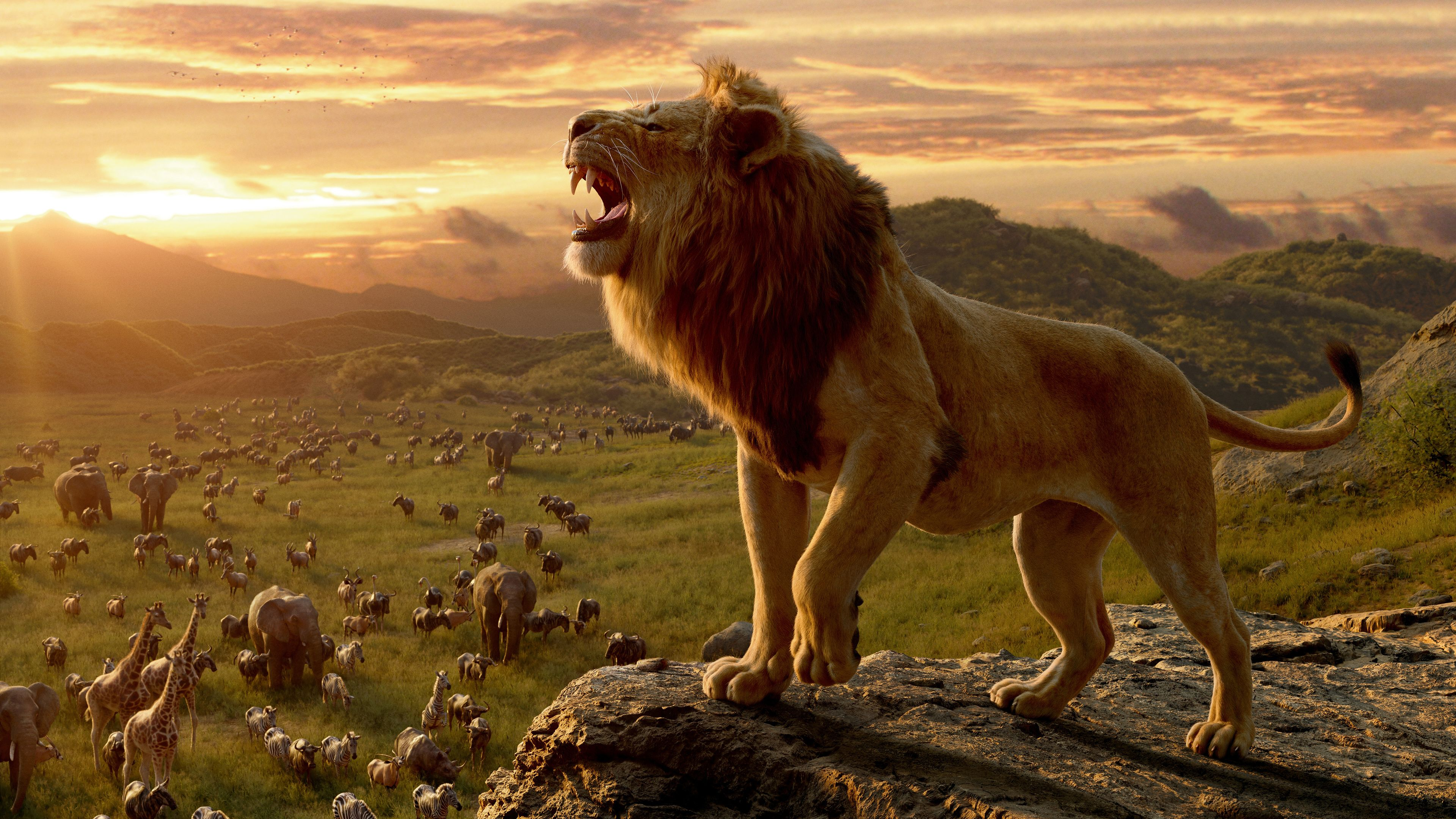 The Lion King Movie The Lion King Wallpapers Movies Wallpapers Lion Wallpapers Hd Wallpapers Disney Wallpapers 8k Wallpaper Lion King Movie Lion King Lion