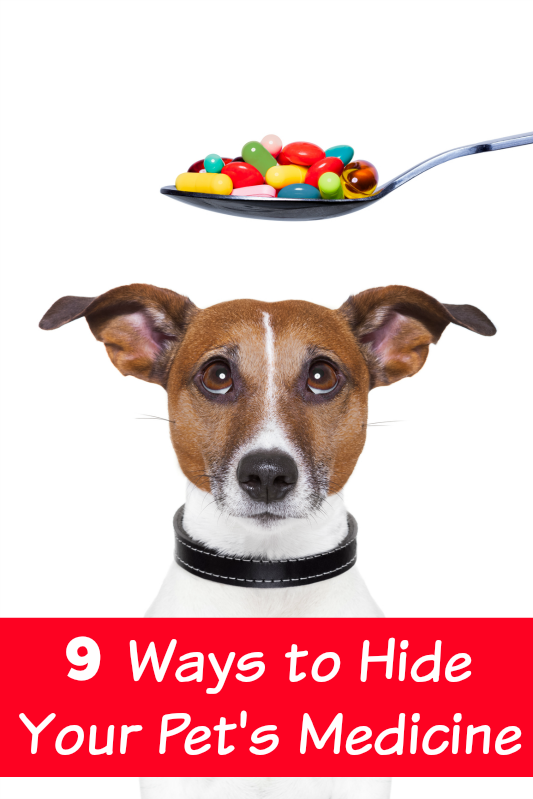 9 Ways to Hide Your Pet's Medicine (Pawsitively Pets
