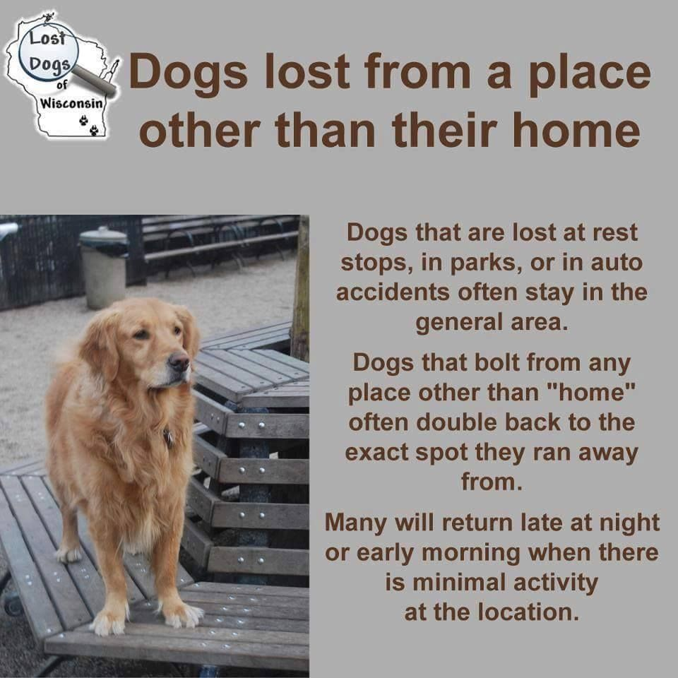 Dogs That Are Lost At Rest Stops In Parks Or In Auto Accidents Often Stay In The General Area Dogs That Bolt From Any Place O Losing A Dog Losing A