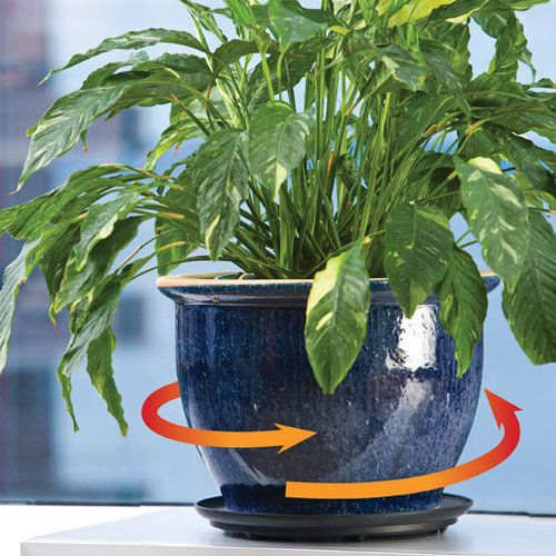 Down Under Plant Turner 12 Inch Rotating Saucer Plants Plant Saucer Flower Pots