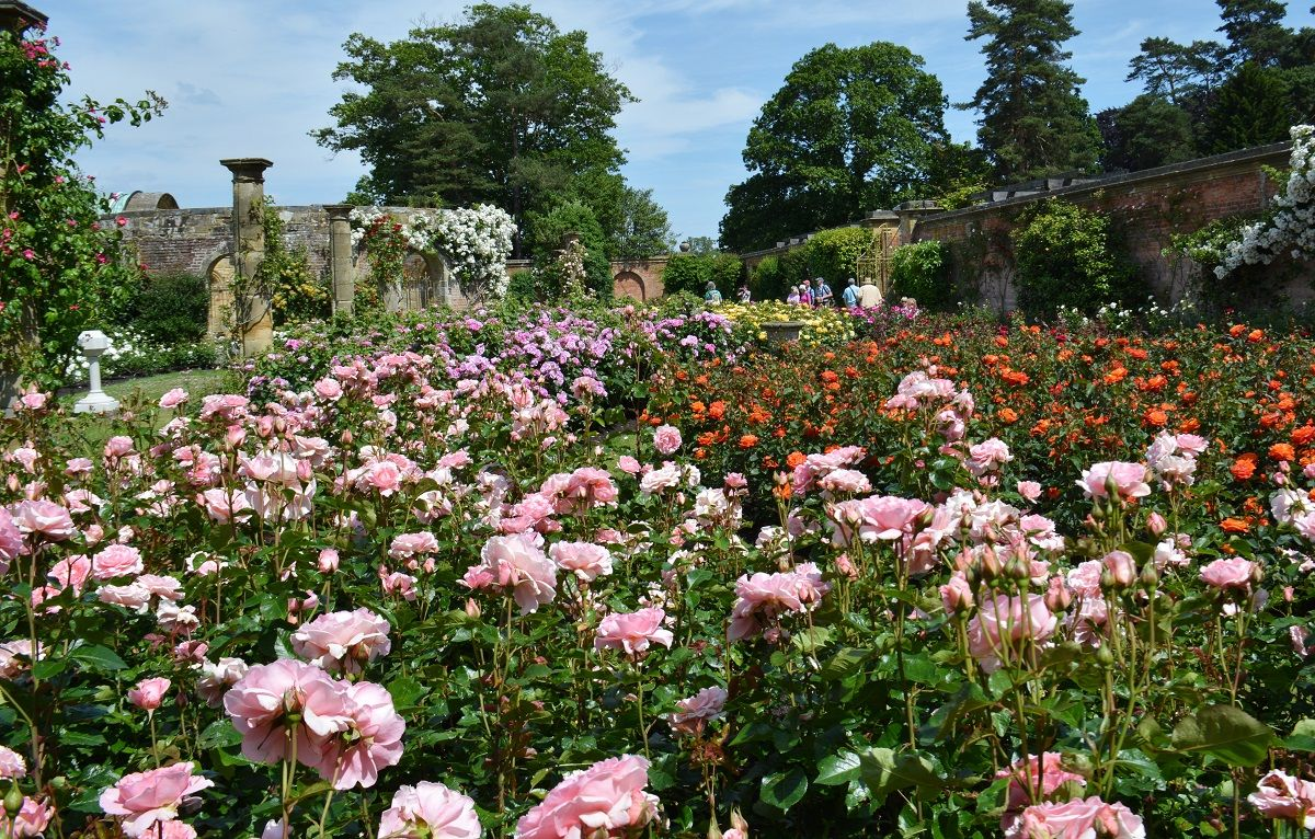 The #rose garden is in full bloom at Hever Castle | Jolly Old ...