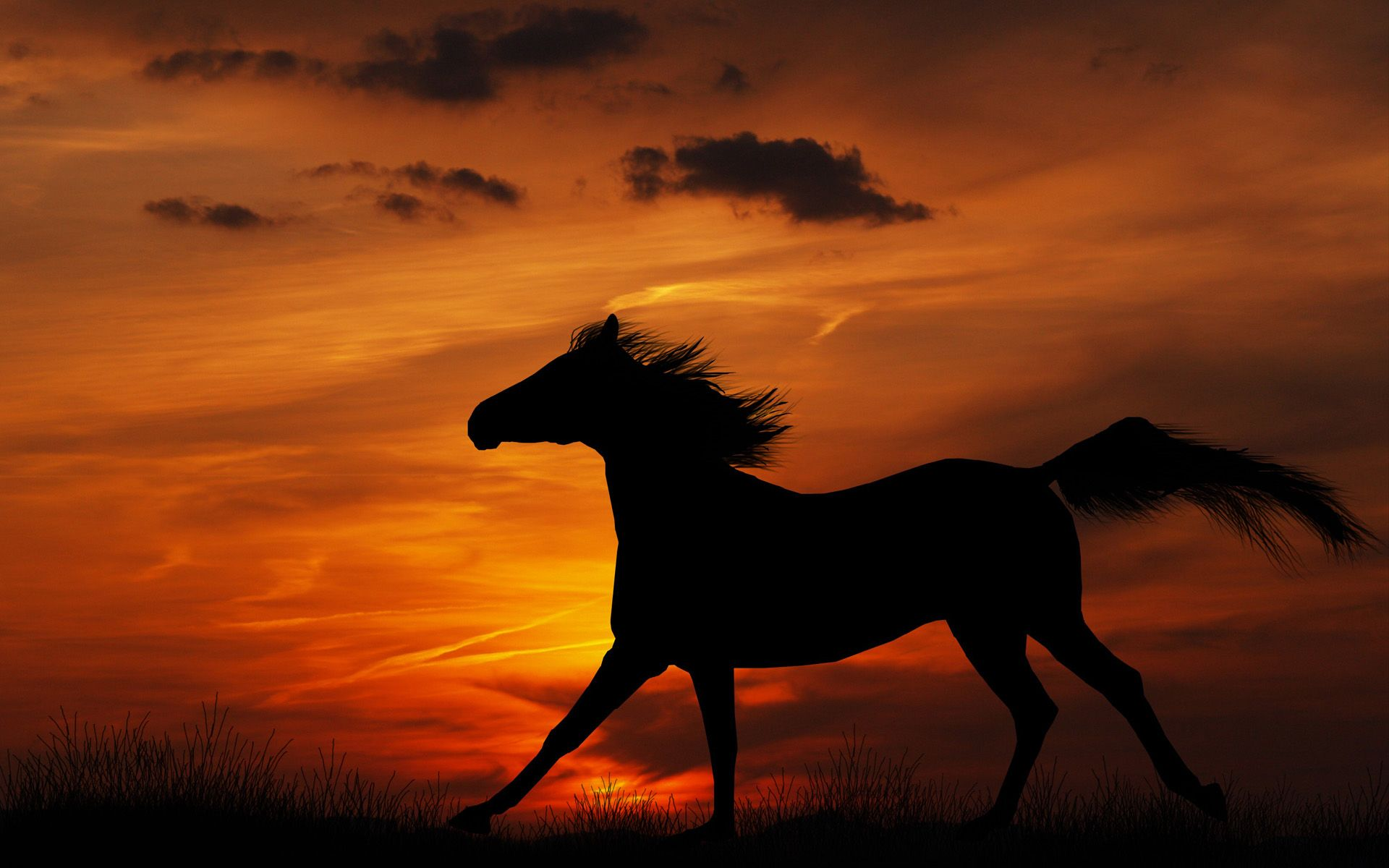 Horse Sunset Wallpapers High Resolution