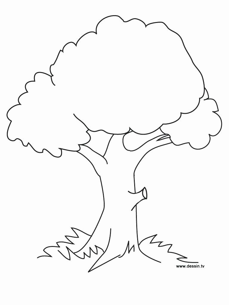 Big Tree Without Leaves Coloring Page Tree Coloring Page