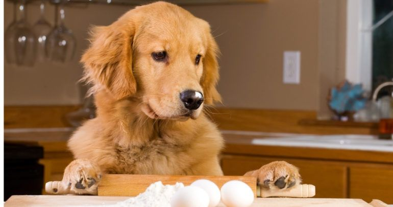 Can Dogs Eat Eggs We Suggest Using Them As Toppers Can Dogs Eat