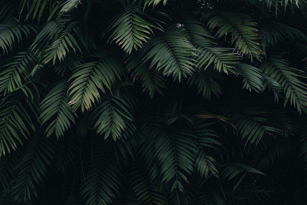 10 Tropical Jungle iPhone X Wallpapers Nature wallpaper