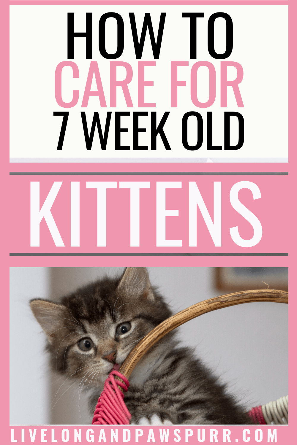 The Simple Guide To 7 Week Old Kittens Live Long And Pawspurr In 2020 Kittens Getting A Kitten Kitten Care